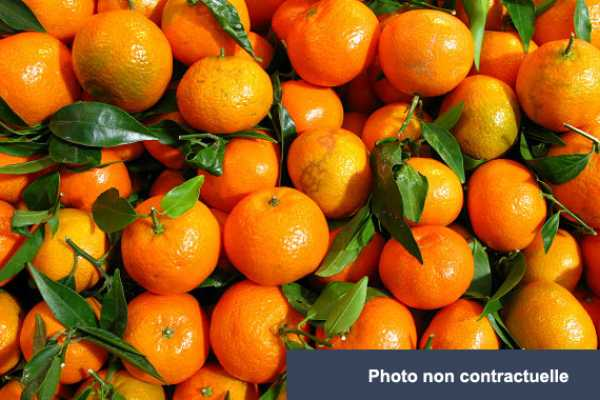 Lot d'oranges